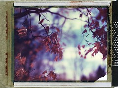 (er_code_blue) Tags: largeformat 4x5 instant analog film 59 conversion polaroid900 alpenhause polaroidweek polaroid