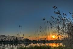 Reservoir sunset (Joseph_Hooper) Tags: sunset sun low reservoir water reflection reeds nature weston turville aylesbury buckinghamshire hdr tripod bracketed