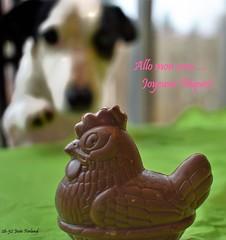 26-52 Josée Ferland - Allo mon coco (Josée Ferland) Tags: poule chocolat pâques chien
