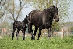 Mum & son in the sun C (Drummerdelight) Tags: captiveanimals horses lowpov