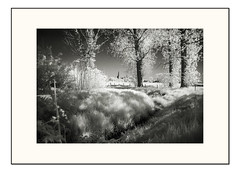 Landscape in infrared -  Rev. (Fr@ηk ) Tags: dsc00613limblandscapeir mrtungsten62 frnk landscape landschap ir posterholt limburg thenetherlands nature sony infrared bw monochrome church meadow woodlands spring lente
