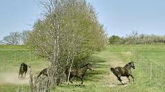 _UWE1419 1 (spatzerle61) Tags: pferde horses