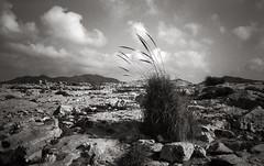 Níjar, 2018 (Alfonso Lazo) Tags: olympus xa2