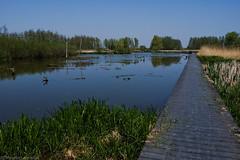 Waterliniepad Houten & Nieuwegein (Maarten Kerkhof) Tags: fujifilmxe2 verdronkenbos w xe2
