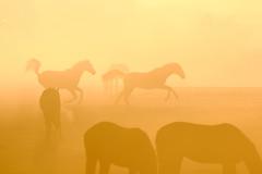 Horseplay (Yorkshire Pics) Tags: 2104 21042019 21stapril 21stapril2019 swillington swillingtonsunrise horses horsesunrise horsesilhouettes horseplay sunrise leeds eastleeds easter eastersunday swillington2019