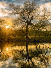 The tree on the river (Steppenwolf33) Tags: