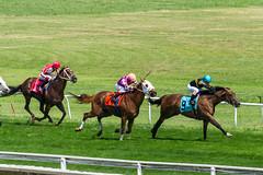 9 - The Curt Fox (GB) (Pedroza, Brian); 7 - Bret's At Caddies (Barbaran, Erik); 1 - Robie the Cat (Cruz, Alex) (avatarsound) Tags: boston suffolkdowns horse horseracing horses jockey jockeys race racetrack racing rider riding sport