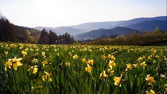 Happy Easter ! (joannab_photos) Tags: break landscape mountains yellow countryside grass flowers pâques easter