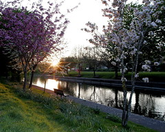 Hythe sunset (dannyhollands) Tags: hythe sunset water canal royalmilitarycanal blossom reflections 77d