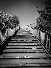 2019-04-21-154015_bw (Schmidtze) Tags: architektur berlin berlinpankow blackandwhite einfarbig olympusepl9 olympusm918mmf4056 pankow prenzlauerpromenade schwarzweis stadt stair staircase treppe menschenleer deutschland