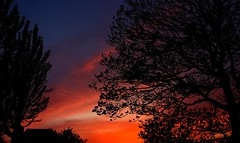 Night begins #ThroughHerLens (7 Blue Nights) Tags: night landscape sky color dusk throughherlens clouds trees sunset