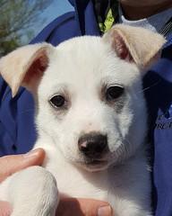 Mudbone (DDA1) Tags: saveapetilorg shelter puppy adoption adoptionshelter adoptioncenter adoptable adopt