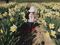(Inclusive.) Tags: child toddler infant red rain boots washington wa pnw pacific northwest tulip tulips festival mt mount vernon 2019 annual cute skagit county
