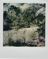 Hanging out at the river (EllenJo) Tags: polaroid instantfilm 2019 ellenjo sx70 april2019 tuzirap tuzigootriveraccesspoint clarkdalearizona clarkdaleaz verdevalley verderiver riparian