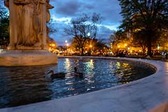 Dupont Ducks (Mike J Maguire) Tags: washingtondc zeissbatis25mmf20 dupontcircle dusk water fountain