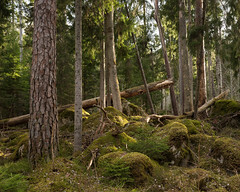 Lysings Urskog Naturreservat I (Gustaf_E) Tags: forest landscape landskap lysing lysingsurskognaturreservat naturreservat skog sverige sweden urskog woods östergötland