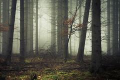The secret life of the forest triangles (Netsrak) Tags: baum bäume eu eifel europa europe forst landschaft natur nebel rheinland rhineland wald fog forest landscape mist nature trees winter woods
