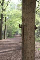 IMG_0393 (picolo_rasco@hotmail.com) Tags: nature fauna flora damme belgium