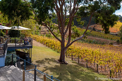 Mount Lofty Ranges Vineyard, Lenswood, SA. (andrew52010) Tags: vineyard lenswood restaurant adelaidehills mountlortyrangesvineyard vineyards mountloftyranges winery adelaide southaustralia australia
