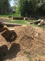 283DEFD7-8650-4D50-A8CA-9B58111D8928 (Lakeview Stump Grinding) Tags: lakeview columbia strongsville stump grinding ohio station north royalton cleveland berea olmsted falls landscaping bay village northeast service grind removal