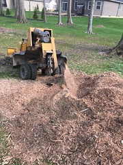 4B9BDECF-993B-4F7C-AFB1-02ED1D5FE3CD (Lakeview Stump Grinding) Tags: lakeview columbia strongsville stump grinding ohio station north royalton cleveland berea olmsted falls landscaping bay village northeast service grind removal