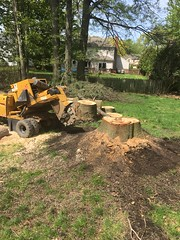1E92B316-F70D-4737-AFB0-B6FC9F38A490 (Lakeview Stump Grinding) Tags: lakeview columbia strongsville stump grinding ohio station north royalton cleveland berea olmsted falls landscaping bay village northeast service grind removal