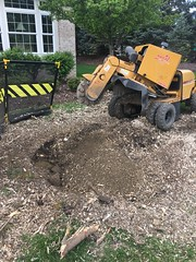 ABFC9BCC-33E5-4F95-AE72-5BD0215F3BF8 (Lakeview Stump Grinding) Tags: lakeview columbia strongsville stump grinding ohio station north royalton cleveland berea olmsted falls landscaping bay village northeast service grind removal