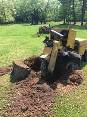 56343B43-827F-4F90-971A-A3819EDF61C9 (Lakeview Stump Grinding) Tags: lakeview columbia strongsville stump grinding ohio station north royalton cleveland berea olmsted falls landscaping bay village northeast service grind removal