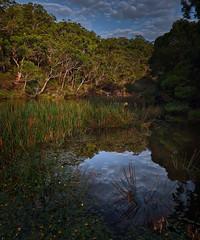 #3158 Royal National Park (Rmonty119) Tags: canon eos r lightroom skylum water tree national park royal