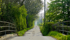 Country Road (JamieHaugh) Tags: clevedon somerset england uk gb britain outdoors sony alpha zeiss a7rii ilce7rm2 nature country countryside road morning path track trees green day summer horizon bridge distance tunnel dof depth