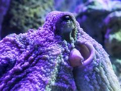 P4210112 (asferic) Tags: barcelona catalonia catalunya aquarium fauna sea