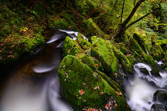 Stock Ghyll Force (Rico the noob) Tags: 2018 rock d850 lakedistrict 2470mm nature water outdoor stones rocks 2470mmf28e trees waterfall travel published dof longexposure landscape tree uk leaves