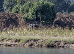 DSC_3753_1 (Marshen) Tags: zambia canoe capebuffalo