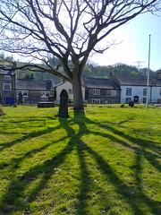 (Chris Hester) Tags: 143 bingley all saints church graveyard tree shadows