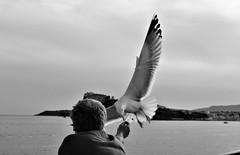 Hungry!!! (modestino68) Tags: bn bw gabbiano seagull uomo man nave ship volo flight isola island