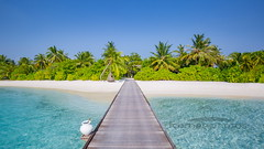 Maldives island (icemanphotos) Tags: nofilter tree barbados concept resort luxury sand summerscenery maldivesisland tropical island motivational inspirationalimages nature vacation holiday sun sea relax shore sunset beach tropicalparadise travel landscape bahamas borabora tourism dominican vacationdestinations thailand nobody chaiselounge caribbean relaxingbeach beautiful sunny loungechair ocean idyllic paradise summer seychelles sky beachscene calmwater resorthotel maldives coast wonderful horizon
