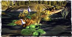 ~*SR*~ & ~*TD*~ Bayounimba Tree Log - Gallinule_001 (Mondi Beaumont) Tags: fantasy faire 19 2019 11th ff rfl relayforlife relay for life fight cancer sweet revolutions ~sweet revolutions~ ~sr~ telperion designs ~telperion designs~ ~td~ deco decorations mesh bayounimba garden gardening sim building crafting plants animals swamp elf elven voodoo cult cultural sl secondlife second gallinule hen hens blue tree log nest breed breeding bird birds nature
