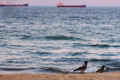 Birds on the beach (mmichalec) Tags: sea baltic gdansk gdańsk beach poland water morze plaża birds ptaki bird ships statki