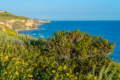 View from Ocean Trails Reserve at Trump National Golf Club (SCSQ4) Tags: california cliff coastline hikingtrail losangeles ocean oceantrailsreserve ranchopalosverdes superbloom trumpnationalgolfclub wildflowers