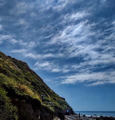 IMG_20190422_104722hdr_cr (joeginder) Tags: jrglongbeach oceantrails pelicans pacific california beach rocky cliffs wildflowers hiking