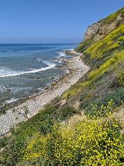 IMG_20190422_105113 (joeginder) Tags: jrglongbeach oceantrails pacific california beach rocky cliffs wildflowers hiking