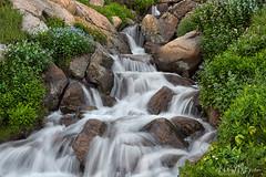 _2HB5720 (Hilary Bralove) Tags: wildflowers waterfall colorado nikon landscape nature outdoors naturebeauty