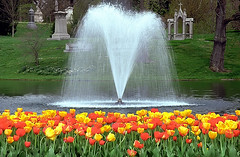 "Cincinnati - Spring Grove Cemetery & Arboretum ""Willow Lake Fountain"" (David Paul Ohmer) Tags: cincinnati ohio spring grove cemetery arboretum tulips willow lake fountain"