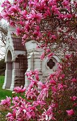 "Cincinnati - Spring Grove Cemetery & Arboretum ""Bogman Mausoleum Inside Betty Magnolias"" (David Paul Ohmer) Tags: cincinnati ohio spring grove cemetery arboretum bogman mausoleum betty magnolia"