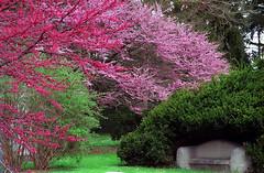 """Cincinnati - Spring Grove Cemetery & Arboretum """"Springtime At Rest"""" (David Paul Ohmer) Tags: cincinnati ohio spring grove cemetery arboretum lilac tree"""