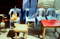 (Hanoi L i f e A r t) Tags: tuanducpham hanoi hanoilifeart vietnam sumer nikonf2 kodakvision3 250d aeglab streetlife filmphoto 135mm