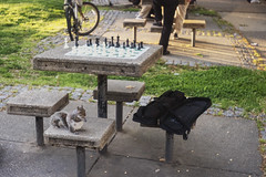 Waiting on a Game (Mike J Maguire) Tags: squirrel chess washingtondc dupontcircle