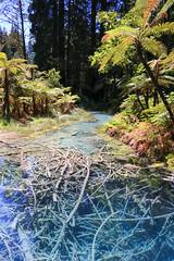 Old thermal pond - Redwoods walkway - Rotorua - New Zealand (Valentin.LFW) Tags: newzealand nouvellezeland south hemisphere photographer photography canon aotearoa birds wildlife landscape auckland
