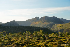 20190419-74-Orange fagus on side of Geryon (Roger T Wong) Tags: 2019 australia cradlemountainlakestclairnationalpark geryon glouldplateau lakestclair mtgeryon np nationalpark rogertwong sel24105g sony24105 sonya7iii sonyalpha7iii sonyfe24105mmf4goss sonyilce7m3 tasmania bushwalk fagus hike outdoors tramp trek walk