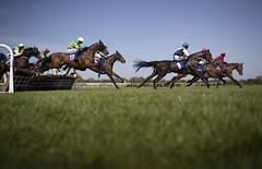 RP_ID00345656 (Horse Racing Ireland) Tags: fairyhousecheltenham countymeath ireland